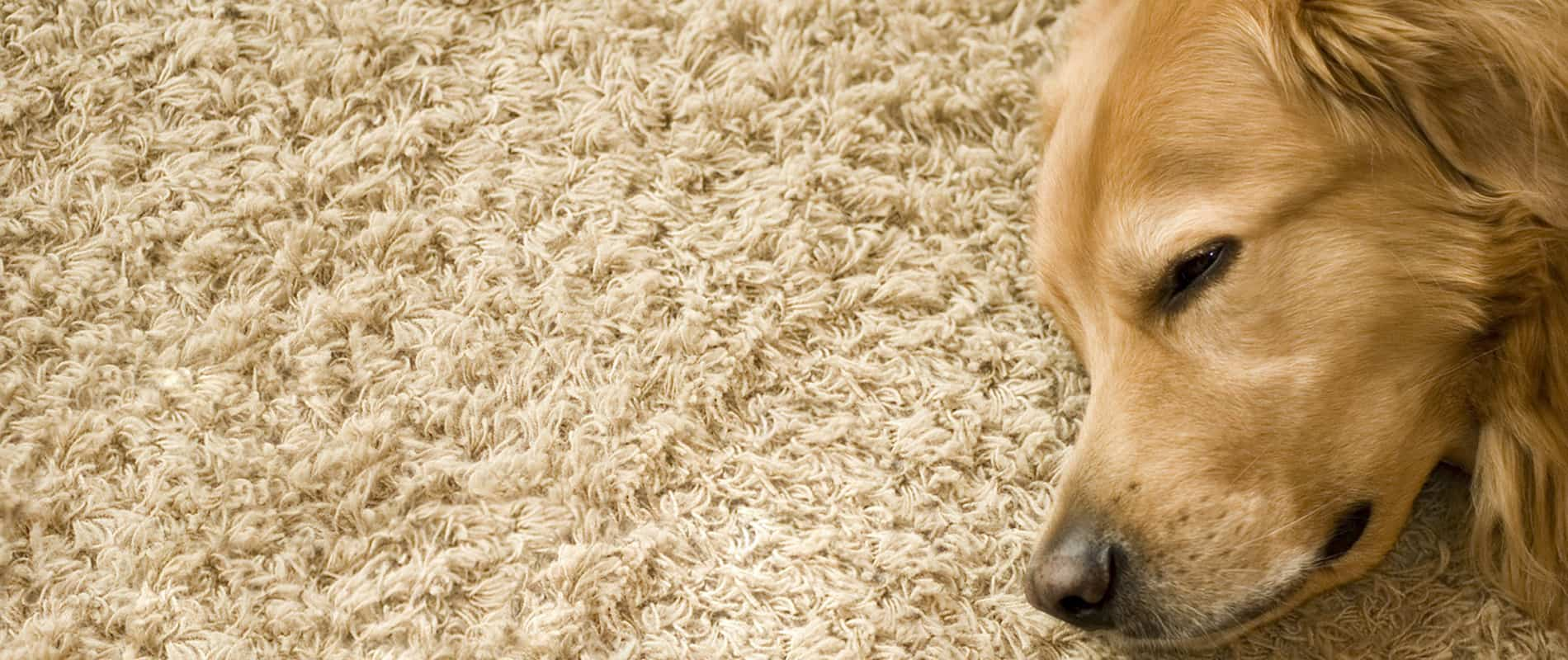 Pet Spot And Odor Removal